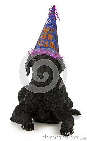 Счастливая собака Новый Год
