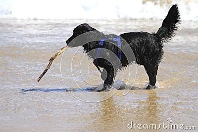 Счастливая собака играя на пляже