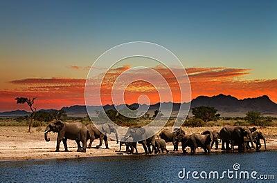 табун слонов
