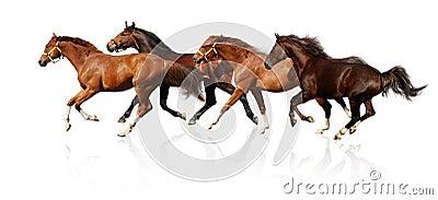 табун gallops