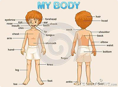 тело мое