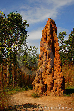 термит насыпи
