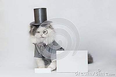 Толковейший кот