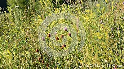 Трава в конце-вверх степи сток-видео