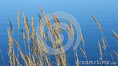 Трава и озеро сток-видео