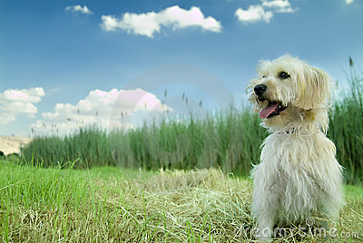 трава собаки