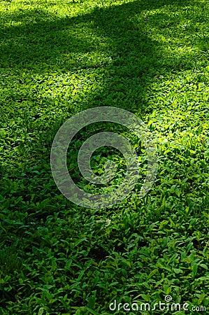 Трава & тень