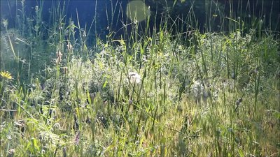 трава толщиной видеоматериал