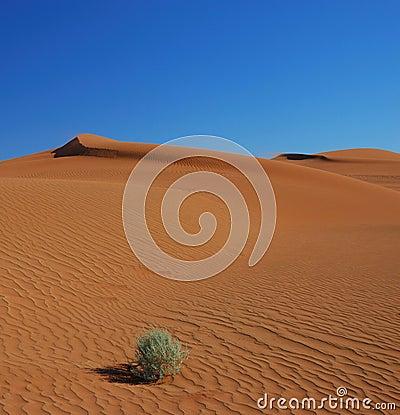 трава дюн