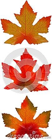 трио клена листьев