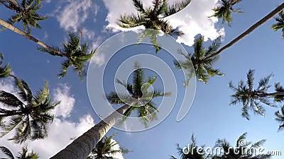 Тропический пляж с пальмами кокоса против акции видеоматериалы