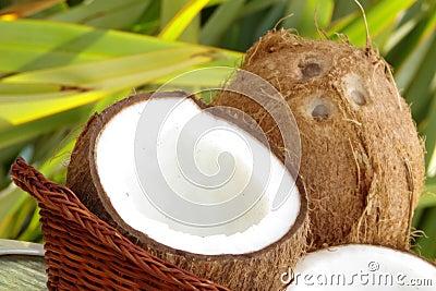 тропическое кокосов свежее