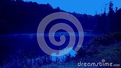 Туман в ночном лесу сток-видео