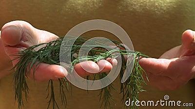 Ударить листья в руке сток-видео