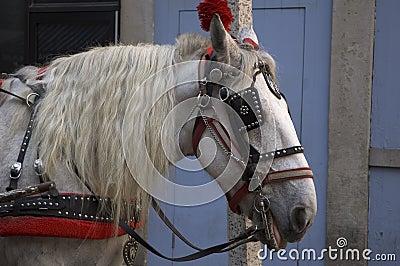 украшенная лошадь
