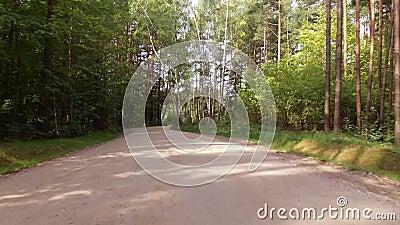 Управлять автомобилем на дезертированной дороге леса видеоматериал