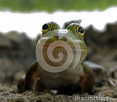 усмехаться лягушки