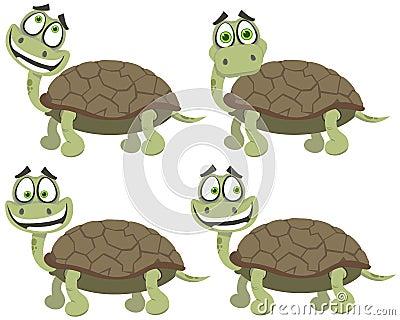 установите черепах