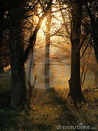 утро осени излучает солнце