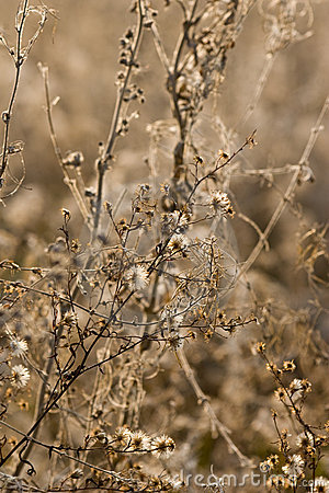 фауна цветет одичалое