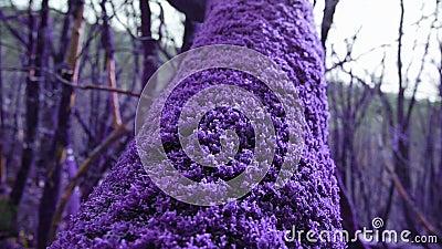 Фиолетовый лес сказки перерастанный с волшебным толстым пурпурным стволом дерева мха в конце-вверх Фантазия, нереальная, сказка видеоматериал