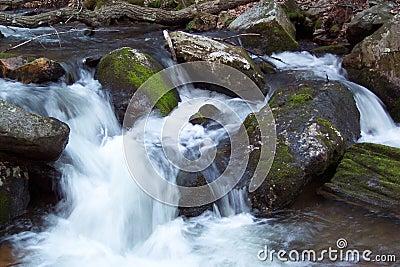 форель потока