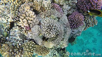 Флора и фауна коралловых рифов Красное Море видеоматериал