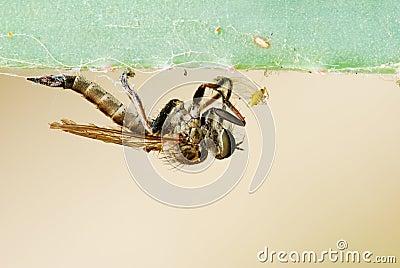 хищник насекомого