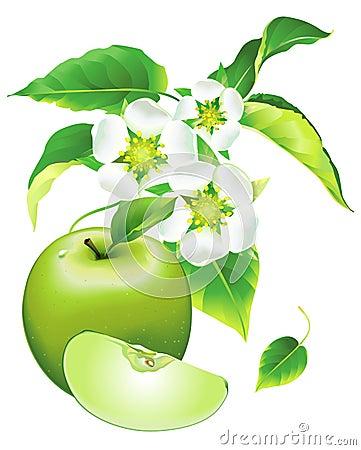 цвести яблока