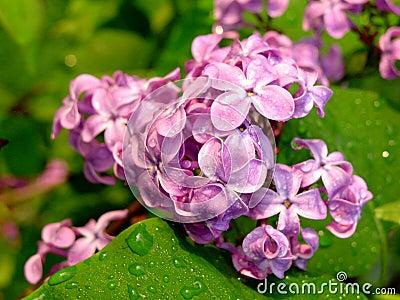 цветастые цветки