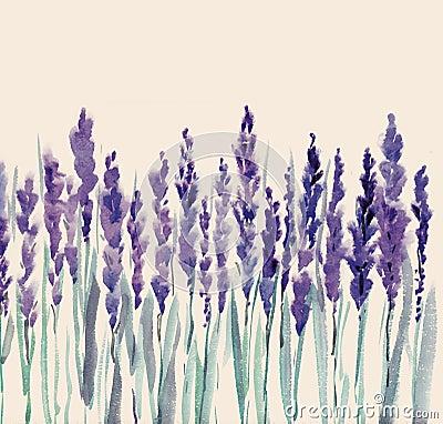цветет лаванда
