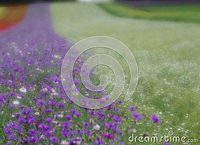 цветет одичалое