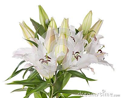 Цветки белой лилии