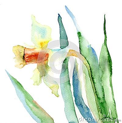 Цветки Narcissus