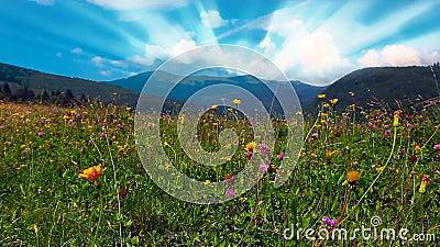 Цветные горные холмы акции видеоматериалы