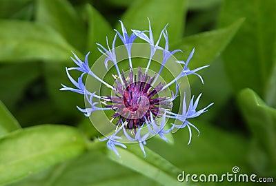 цветок необыкновенный
