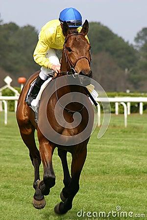 человек лошади