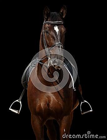 черная изолированная лошадь