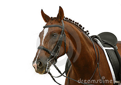 щавель лошади