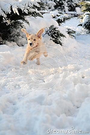 Щенок в снежке