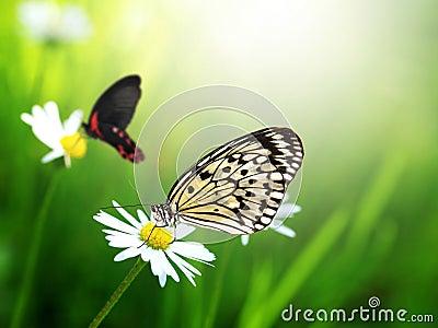 Экзотические бабочки