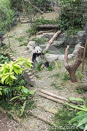 Экспонат панды