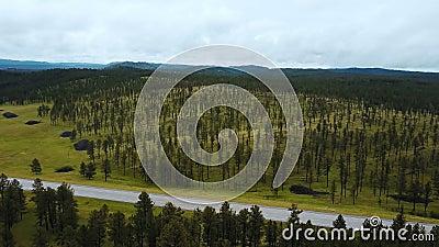 Эпичный воздушный трутень снятый большого дерева покрыл скалистые холмы показывая неимоверный горизонт ландшафта леса национально видеоматериал