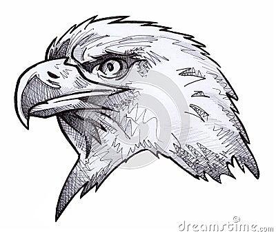 эскиз облыселого орла