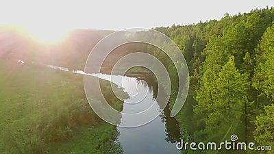 Яркие солнечные лучи падают на зеленый лес по реке Съемка склада теплый солнечный свет падает на красивый густой лес с видеоматериал