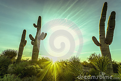 亚利桑那沙漠仙人掌树风景