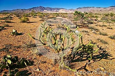 亚利桑那仙人掌沙漠