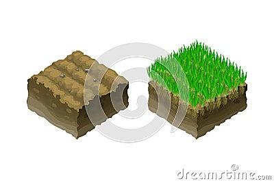 地面或土壤在一张等量截面图-展示草坪草