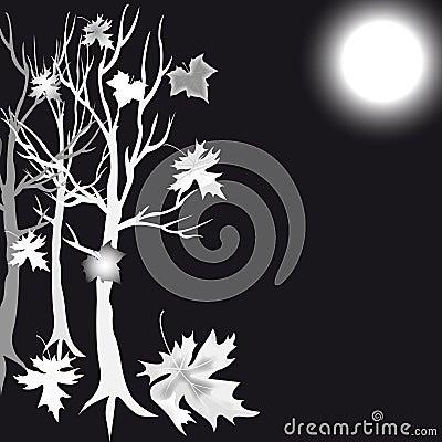 银树槭树和月亮