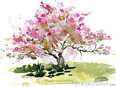 樱花由水彩,开花的苹果树图片